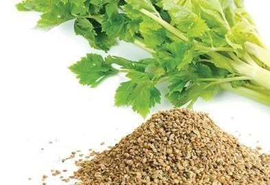 celery seed for gout